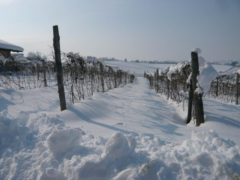 Vinterlandskab.