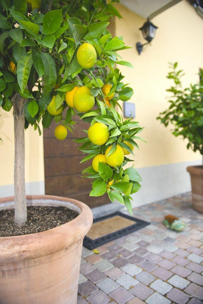 a Apelsiner